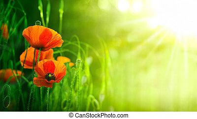 wildflowers, czerwony, maki, w, natura