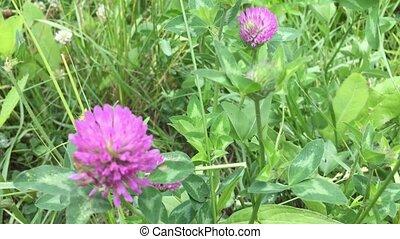 wildflowers, czerwony, wiatr