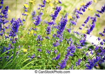 wildflowers, de, minnesota