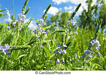 wildflowers, delicaat