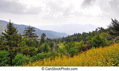 wildflowers, e, spruce-fir, floresta, paisagem, ao longo,...
