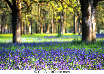 wildflowers, em, prado