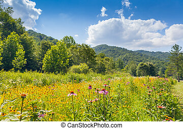 Roan Mountain State Park - Wildflowers growing at Roan...