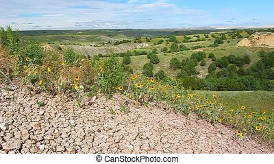 Wildflowers in Badlands