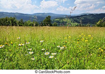 Wildflowers in Europe