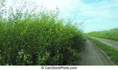 Wildflowers in field - Under high wildflowers staggering...