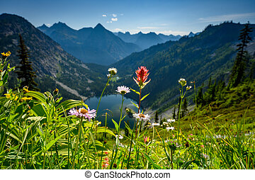 Wildflowers in front of Lake Ann