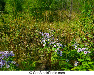 Wildflowers In The Meadow