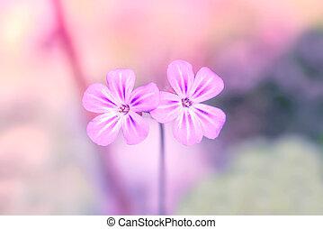 Wildflowers in violet color