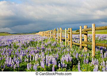 wildflowers in wyoming - wildflowers in the Bighorn...