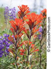 wildflowers, indien, closeup, rouges, pinceau