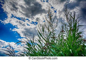 Wildflowers meadow and stormy sky