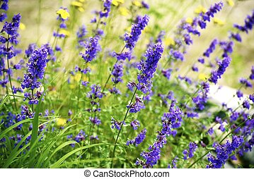wildflowers, minnesota