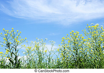 Wildflowers on a background of blue sky