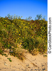 Wildflowers on the Dunes