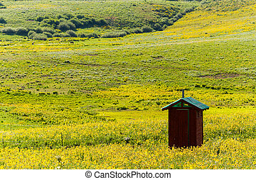 Wildflowers in a full bloom in Crested Butte, Colorado.