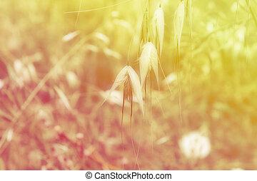 wildflowers, plano de fondo
