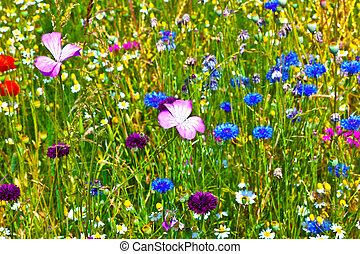 wildflowers, pradera, colorido