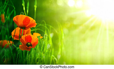 Wildflowers, Red Poppies in Nature
