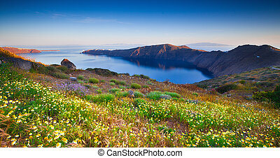 wildflowers, santorini