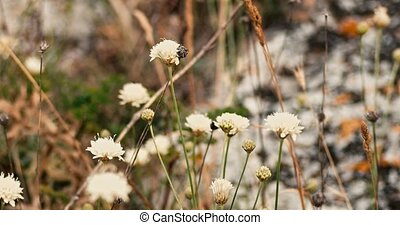 Wildflowers shaking on wind, amny small flowers of white...