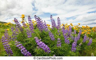 Wildflowers Spring Season Timelapse - Lupine and Yellow...