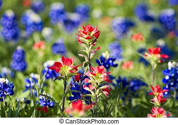 wildflowers, tejas