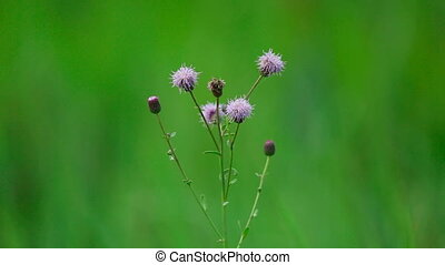 Wildflowers. - Wildflowers, shallow depth of focus.
