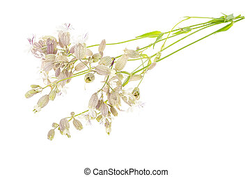 Wildflowers with original inflorescences isolated on white. ...