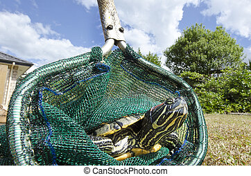 Wildlif and Animals -Sea Turtle - Close up off a marine ...