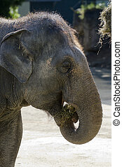 Wildlife and Animals - Elephant