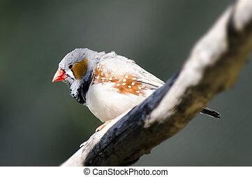 Wildlife and Animals - Exotic Bird