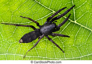 Wildlife and Animals - Spiders