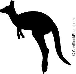 wildlife., animal, silueta, kangaroo., australiano
