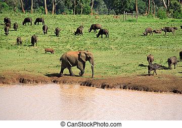 Wildlife at a waterhole
