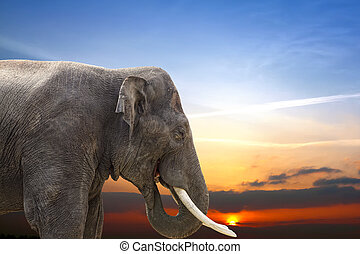 Wildlife at Sunset