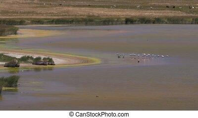 Wildlife At The Laguna De Antofagasta, Argentina - This clip...