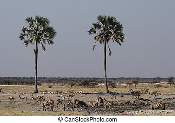 Wildlife at the waterhole in the Etosha National Park, Namibia