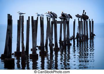 Wildlife Birds on Posts