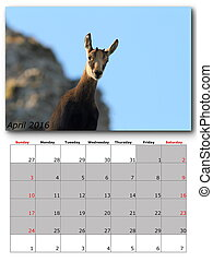 wildlife calendar april 2016
