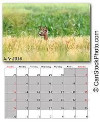 wildlife calendar july