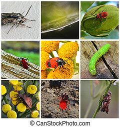 wildlife, collage