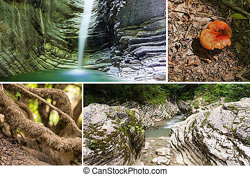 wildlife collage waterfall in the cave azure canvas water mushroom sinuous tree roots mountain river