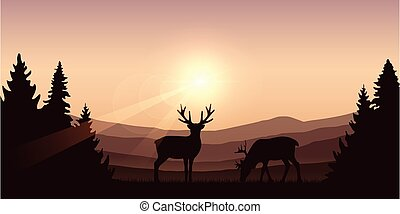 wildlife deer on autumn mountain and forest landscape