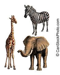 Wildlife I - Giraffe, elephant and zebra. African wildlife,...