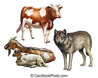 Wildlife II - Wolf, cow and goats. Farm animals, original...