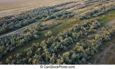 Wildlife Island Biryuchiy. Aerial survey - Wildlife island...