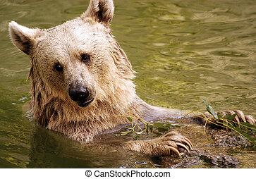 Wildlife Photos - Bear