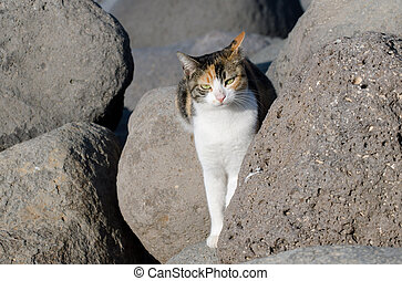 Wildlife Photos - Cats