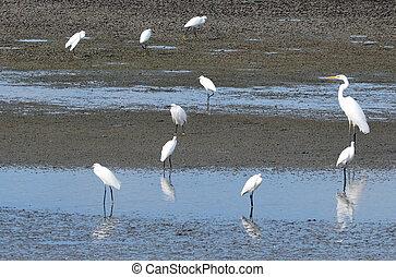 Wildlife Photos - Little Egret - Group of a Little Egret in ...